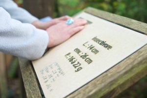 Balade adaptées aux handicaps à Fouesnant