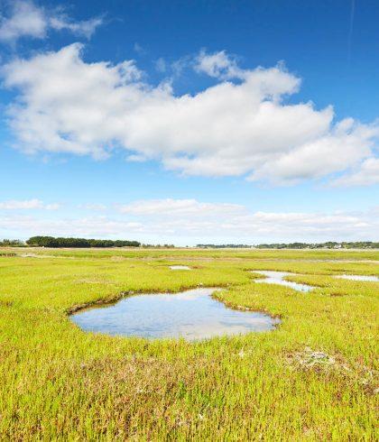La biodiversité du polder de Mousterlin