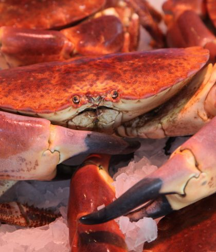 Nos produits de la mer