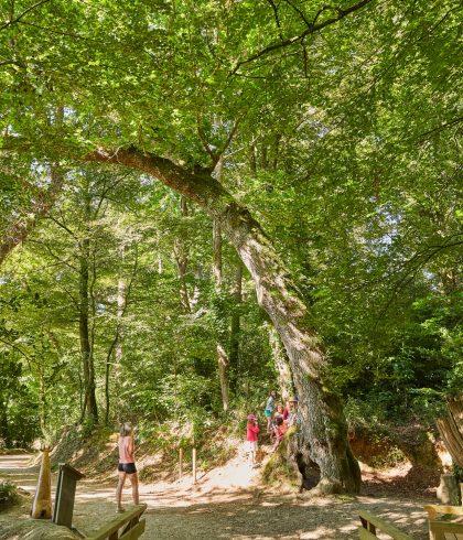 Se promener dans le petit bois et autour de l'anse de Penfoulic