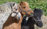 2-poney aven parc