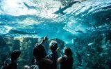 Bassin-requins-Copyright-Simon-Cohen-edited-edited