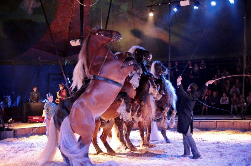 Spectacle équestre «Cavale» par la compagnie Jehol