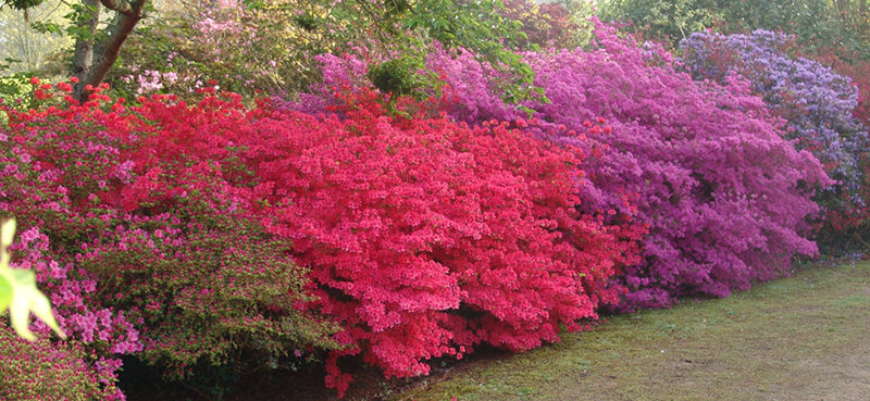 Parc Botanique de Cornouaille Combrit Pays Bigouden Sud (4)