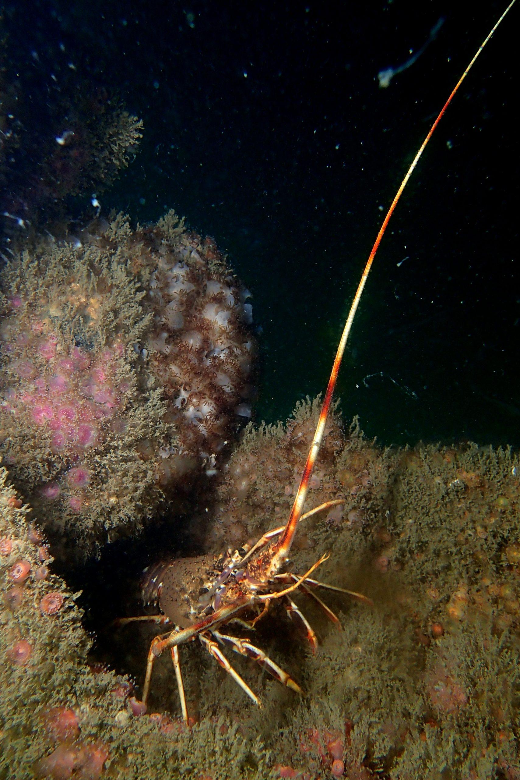 Randonnées subaquatiques aux Îles Glénan le vendredi matin